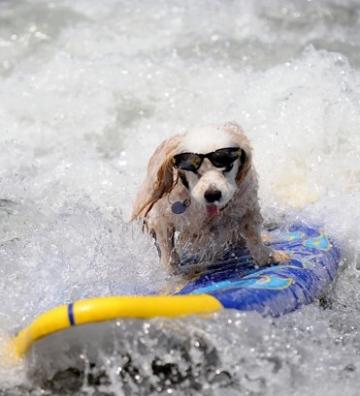 Anche i cani surfano vi consiglio di guardare il film - Tipi di tavole da surf ...